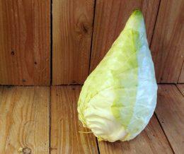 Organic Cone Cabbage
