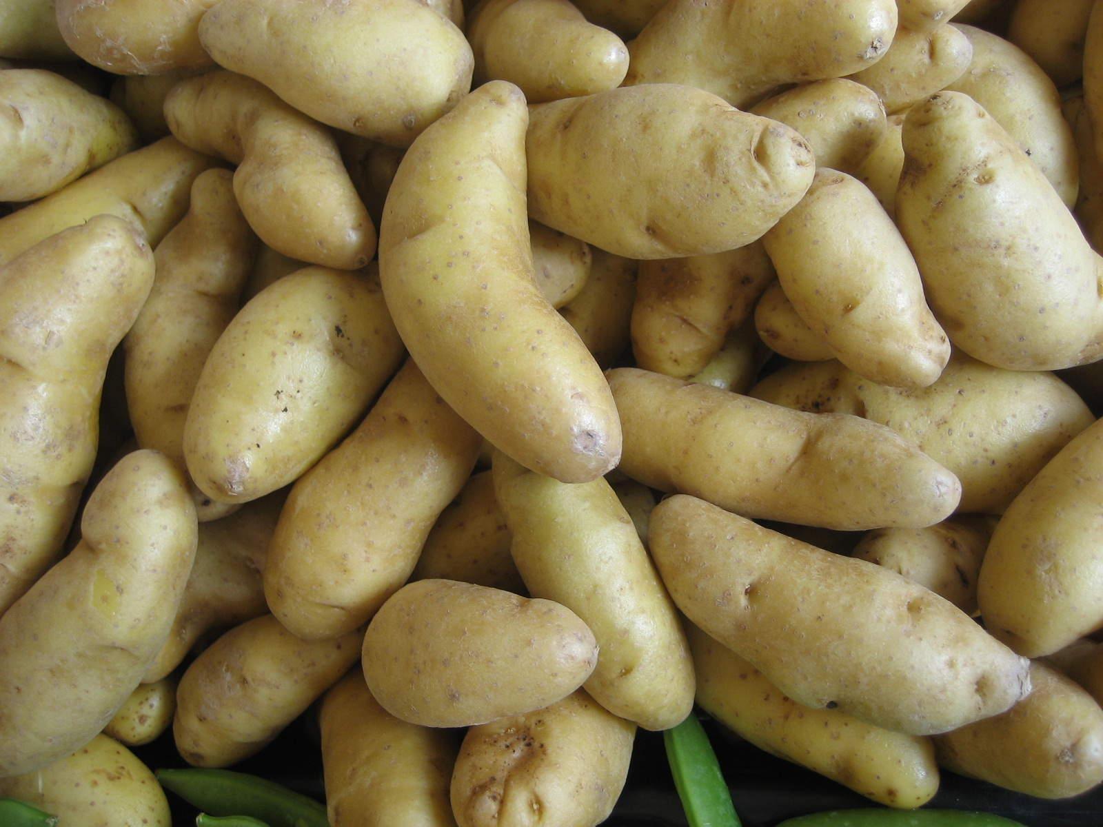 Potatoes – Fingerling Yellow ONTARIO (Pint/Approx 1LB)
