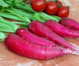 Radish Osterguss red long