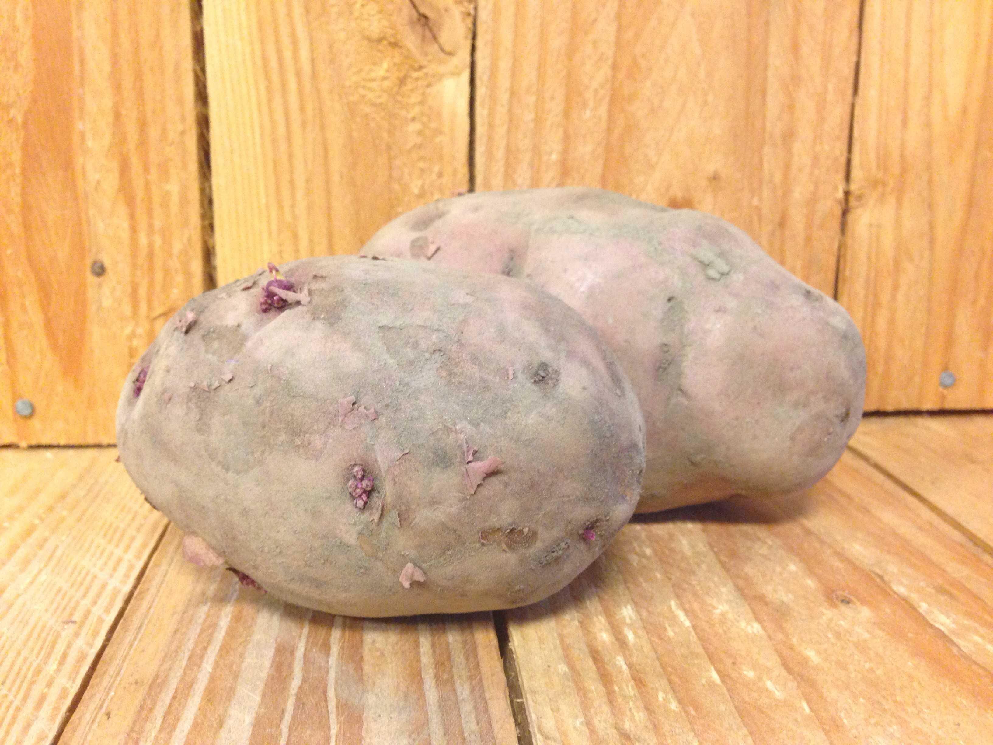 Potatoes – Red QUEBEC Ferme Samson et Fils (5LB Bag)