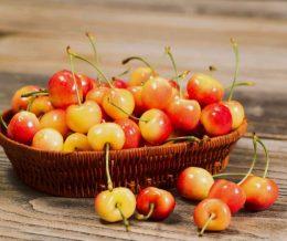 Cherries - Yellow Rainier
