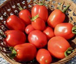 tomato_roma