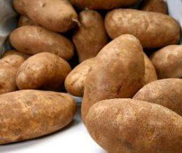 v-russet-potatoes