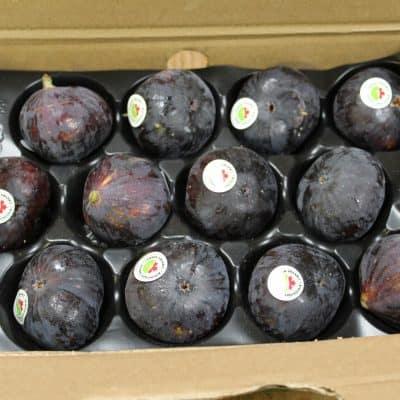 fig case black