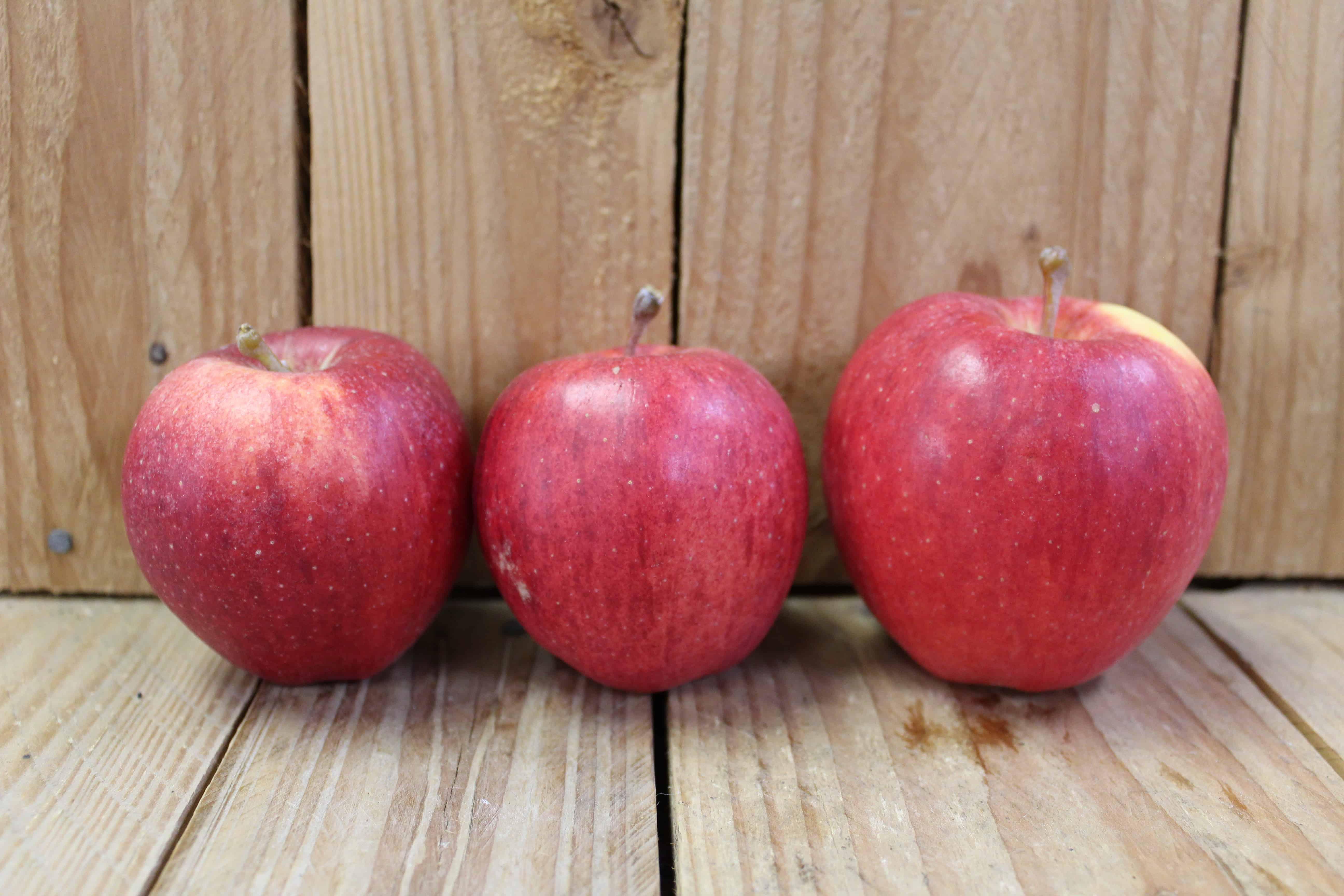Apples – Gala LOCAL Vergers Leahy (2LB Bag)
