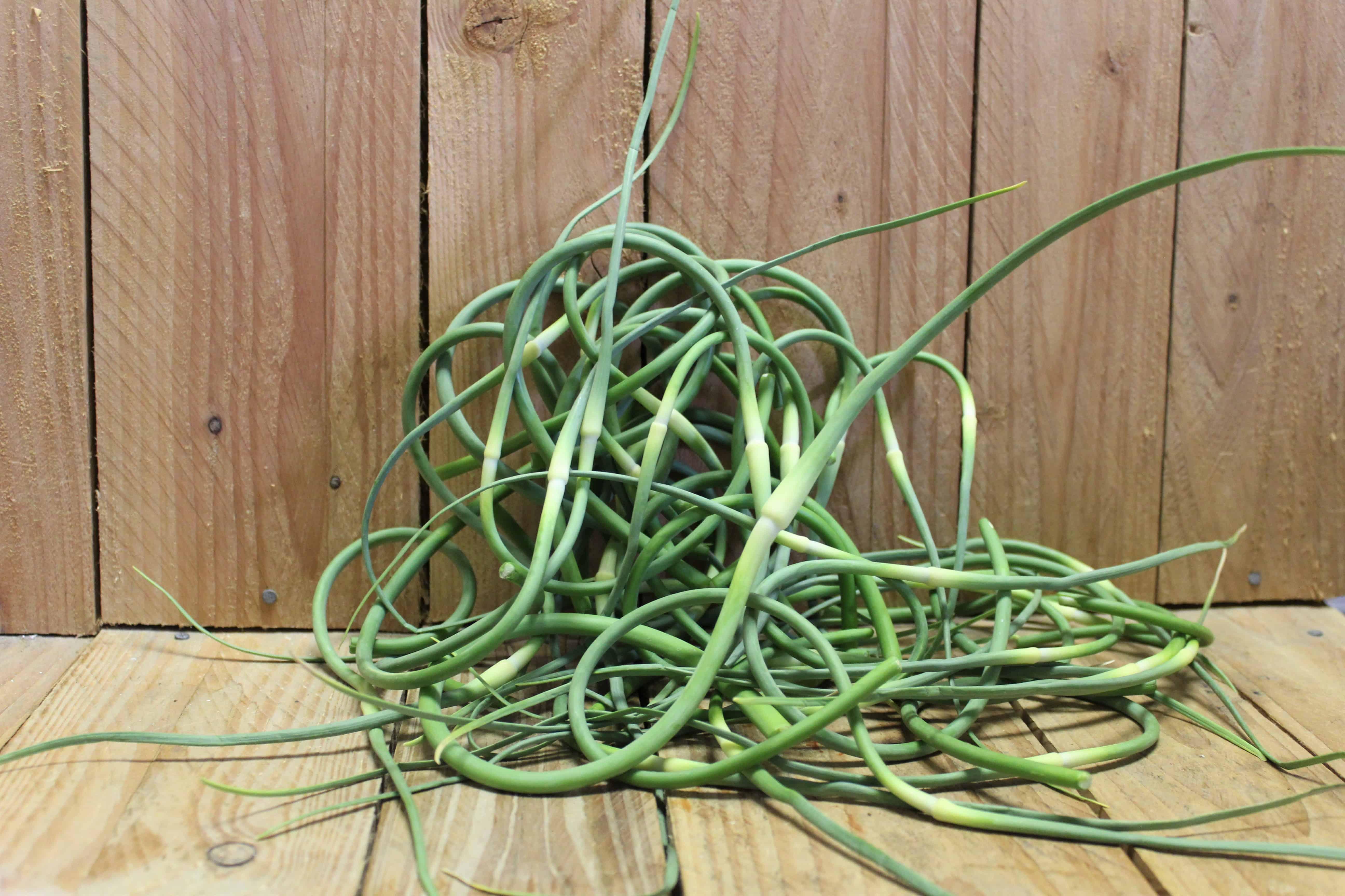 Garlic – Scapes LOCAL Fairweather Farm (454g/1LB Bag)