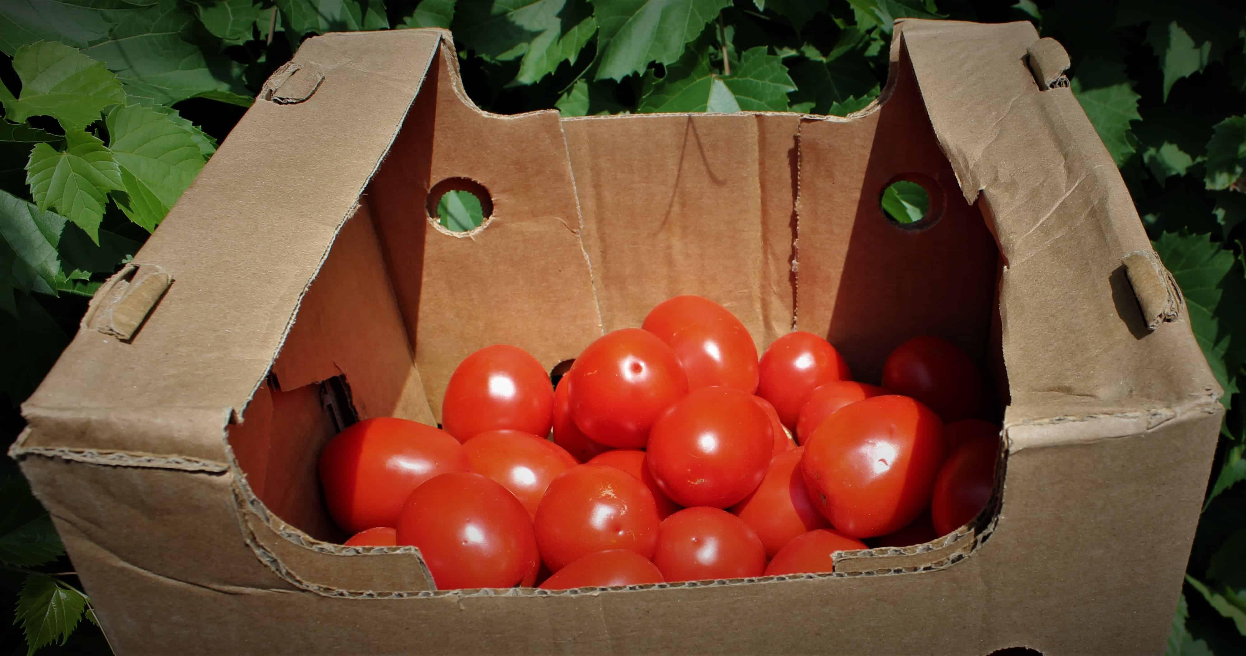 Tomatoes – Roma LOCAL Ferme la Corne de l'Abondance (BULK 5LB Box)